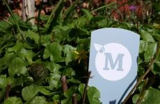 Wouter van Merriënboer – tuinaanleg en tuinontwerp